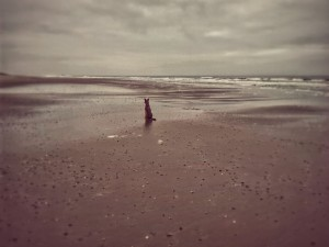 Beach Texel with dog
